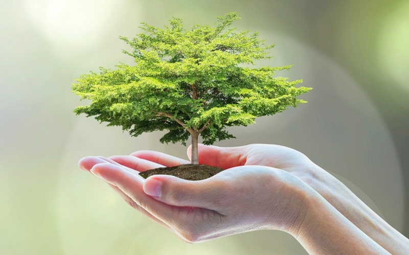 hands holding a small tree